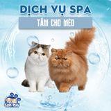 Dịch vụ tắm cho mèo