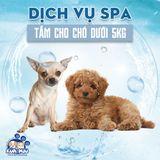 Dịch vụ tắm cho chó dưới 5kg