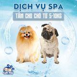 Dịch vụ tắm cho chó từ 5-10kg