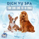 Dịch vụ tắm cho chó 10-20kg