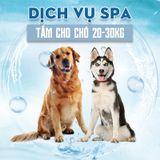 Dịch vụ tắm cho chó 20-30kg