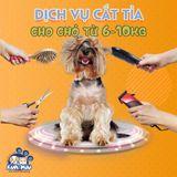 Dịch vụ cắt tỉa tạo kiểu cho chó 6-10kg