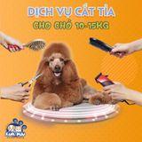 Dịch vụ cắt tỉa tạo kiểu cho chó 10-15kg