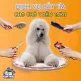 Dịch vụ cắt tỉa tạo kiểu cho chó trên 15kg