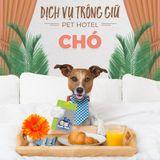 Dịch vụ trông giữ chó 5-10kg (1 ngày)